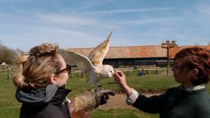 owl-flying